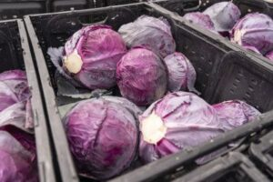 JBG Red Cabbage