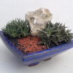 Organic Geometry succulents