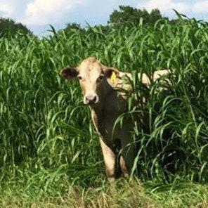 Richardson Farms raw milk